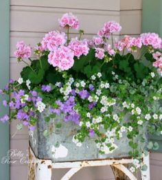 Flower Boxes for Porch Railings . Flower Boxes for Porch Railings . Part Sun Part Shade Window Box Flowers Pink Geranium, Garden Projects, Plants, Cottage Garden, Porch Flowers, Beautiful Flowers, Geraniums, Container Gardening Flowers, Flower Boxes