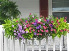 42 Best Flowers for Window Boxes 98 Cascading Flowers for Window Boxes Painters Spring Tips Window Boxes Buzzillions 7 Window Box Plants, Window Box Flowers, Balcony Flowers, Flower Boxes Deck, Railing Flower Boxes, Flower Pots, Railing Planter Boxes, Planter Ideas, Window Planter Boxes