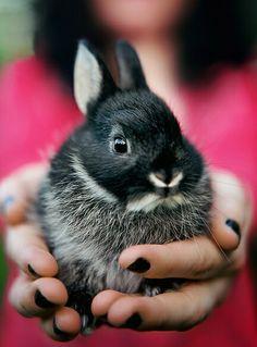 Netherland dwarf rabbit!
