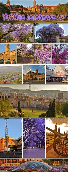 # Pretoria the Jacaranda City of # South Africa West Africa, South Africa, Purple Trees, Good Old Times, Port Elizabeth, Kwazulu Natal, Pretoria, African Countries, The Beautiful Country