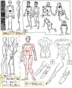 Human Anatomy/ Movements