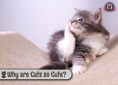 Why Are Cats So Cute? http://ift.tt/2fvCj00