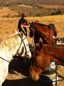 paardensafari, paardenzweet, brett en zo verder!