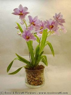 #RossiandRovetti are #SanFrancisco's floral experts in color #trends. This is why our designers proudly present this spectacular Miltonia Orchid Plant -- a perfect example of why #Pantone chose #RadiantOrchid as the 2014 #ColoroftheYear.  Order this for your most stylish friend, #birthdays