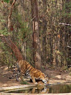 The Legendary Tigres's KANKATTI