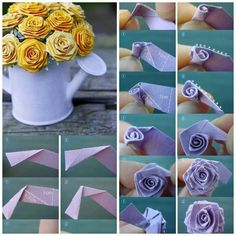 Mini rose... ...