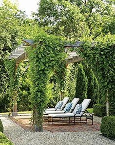 vine covered pergola