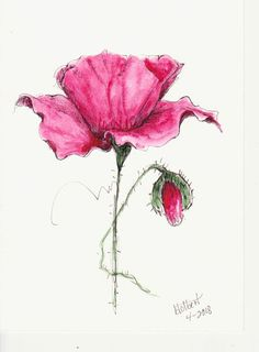 Original Watercolor Poppy Flower Art With Bud Hand Painted Red Poppy Flower Art Pen and Ink Watercolor by inspiringartimages on Etsy Watercolor Poppies, Red Poppies, Watercolor And Ink, Watercolor Paintings, Poppies Art, Poppy Flowers, Ink Painting, Watercolours, Art Aquarelle