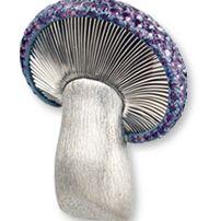 mushroom-Hemmerle