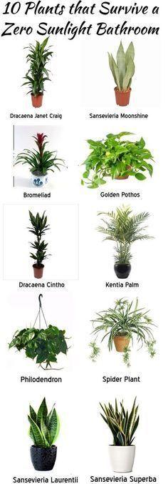 Planten die ook in het donker in de badkamer kunnen. Zero sunlight bathroom plants