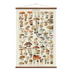 Buy Vintage Mushroom Illustration Canvas Print w/ Wooden Poster Hanger - at online store Vintage Botanical Prints, Botanical Art, Vintage Art, Stained Wood Trim, Dark Wood Stain, Canvas Poster, Wall Canvas, Wall Art Prints, Canvas Prints