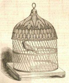 Victorian birdgage