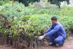 Uberlândia planeja plantio de 1 milhão de novas árvores