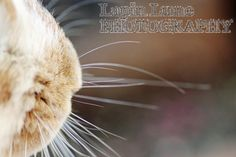 Jojo 1 by Lapin Lune Photography. http://lapinlunephotography.blogspot.com.au/