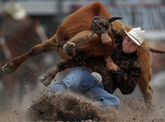 184 Best Steer Wrestling Images In 2014 Rodeo Cowboys