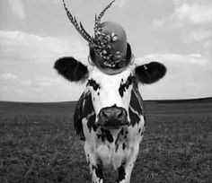 On display at The Milk Factory is a series of black and white photos by fashion photographer Jean Baptiste-Mondino of a Holstein Cow named Hermione donning hats designed by a UK milliner.