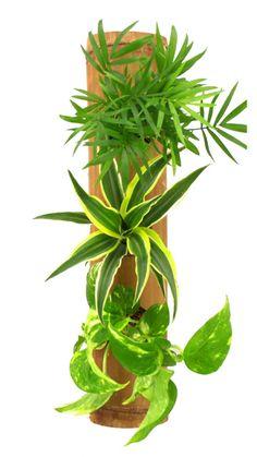 Découvrez nos tableaux végétaux - Découvrez nos cadres végétaux