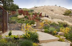 An award winning landscape by Arterra Landscape Architects in Tiburon