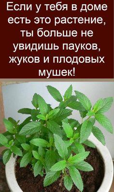 Herbs, Tips, Advice, Herb
