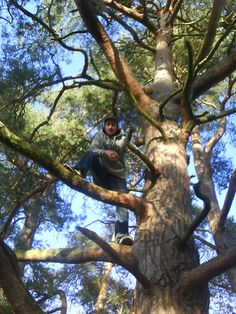 Thom Hunt's 10 top tips for climbing trees