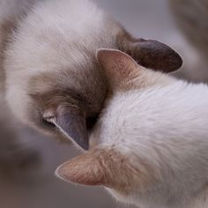 Aww, nuzzling cats