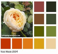 Fall color Palette - October wedding omg glad i got this love all these colors. It's about more than golfing,  boating,  and beaches;  it's about a lifestyle! www.PamelaKemper.com KW homes for sale in Anna Maria island Long Boat Key Siesta Key Bradenton Lakewood Ranch Parrish Sarasota Manatee