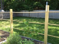 The grape trellis is finally finished, and the vines have been trained and…