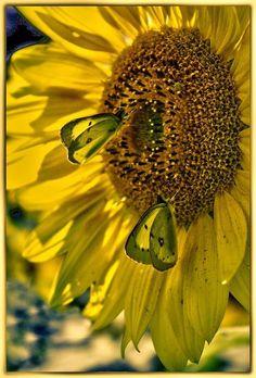 Fashion Jewelry Summer Wreath Sunflowers Shoe Sneaker Shoelace Oval Charm Jewelry