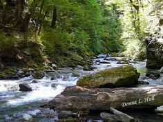Saturday's scene: A Walk in New Zealand Woods. Matukituki River near Wanaka, New Zealand.