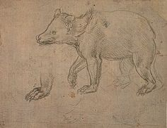 A Bear Walking by Leonardo da Vinci