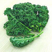 Kale - everything you need to know about Kale - and how you can grow it for yourself! Kale can be expensive to buy from a store, but growing it yourself is so simple and cheap too!