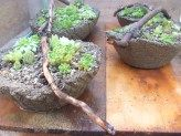 Hypertufa Projects Garden Trellis, Garden Planters, Succulents Garden, Outdoor Planters, Garden Crafts, Garden Art, Garden Ideas, Garden Mosaics, Garden Projects