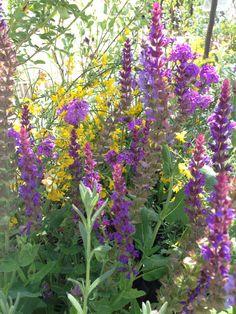 Colors - by Violarancio garden design