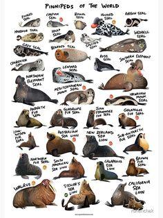 Tiger Species, Dangerous Animals, Animal Posters, Vertebrates, Dog Portraits, Fantastic Beasts, Marine Life, Animal Drawings, Animal Kingdom