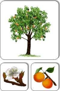 Ovocné stromy Life, Plants