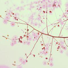 淡淡淡的 by yanfoto, via Flickr