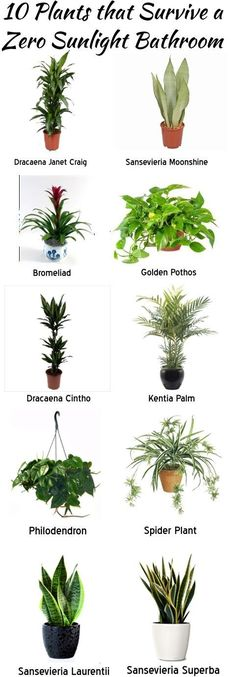 Dennie's Resurfacing has compiled some zero light plants that can add fantastic decor to your zero light bathroom or office. Now find something original and cool to display them in!