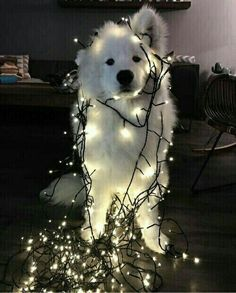 grafika dog, light, and christmas