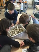 """My fifth graders had a great week with two animal adaptation labs. The first one we did was """"Blubber Gloves. Visible Thinking, Animal Adaptations, Upper Elementary, Labs, Secondary School, Labradors, Labrador, Lab"""