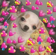New memes heart emoji ideas - Modern New Memes, Dankest Memes, Funny Memes, Baby Memes, Meme Meme, Animal Memes, Funny Animals, Memes Amor, Sapo Meme