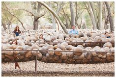 Not your usual family photography session. This family enjoyed their photography session at Welburn Gourd Farm, surrounded by gourds. Photography by Harmony Pyper Studio