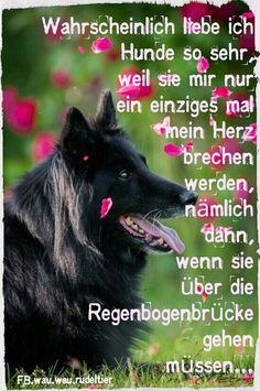 Wahrscheinlich liebe ich Hunde so sehr, weil sie mir nur ein einziges mal mein Herz brechen werden, nämlich dann, wenn sie über die Regenbogenbrücke gehen müssen... Inga Wernken