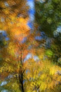 Projet forêt 2958 Photo D Art, Photos, Painting, Artists, Fall Season, Photography, Pictures, Painting Art, Paintings