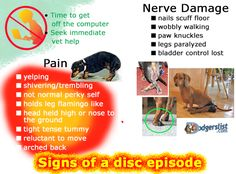 Dog in pain, disc episode, legs not working? Lean on Dodgerslist for expert hand holding day, into the evening.All things IVDD. Pet Dogs, Dogs And Puppies, Doggies, Dachshund Breed, Dachshunds, Vet Help, Intervertebral Disc, Disabled Dog, Dog Hacks