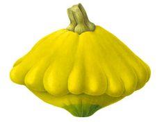 Susannah Blaxill - Botanical Artist - Four Squashes