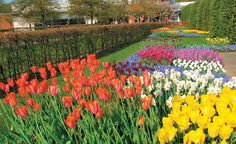 'Tulip Time' river cruise by AMA Waterways, Keukenhof Gardens near Lisse, Netherlands