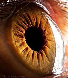 14 macrofotografias incríveis do olho humano