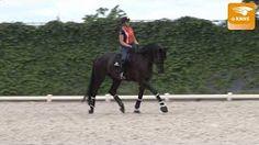 paardentraining anky - YouTube Horses, Youtube, Animals, Animales, Animaux, Horse, Animal Memes, Animal, Animais