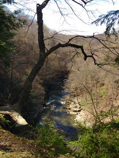 A peek from the Buckeye Trail into the Gorge and river below.