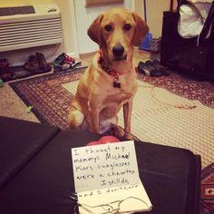 Shamey on you Amos! Funny Dogs, Cute Dogs, Funny Animals, Cute Animals, Michael Kors Sunglasses, Dog Shaming, Having A Bad Day, Pet Birds, Labrador Retriever
